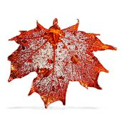 Nature's D'Or Natural Sugar Maple Leaf Pendant without Chain Dipped in Red Copper